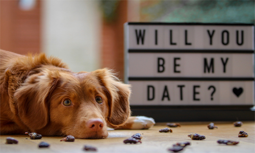 "brown dog next to a sign that says ""will you be my date?"""